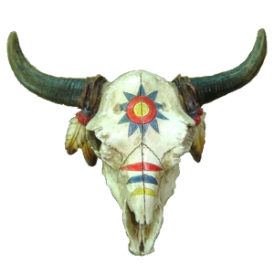 Crâne de bison